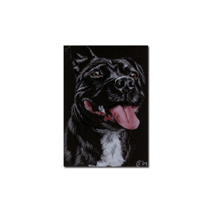 French BULLDOG 5 dog puppy pet pencil painting Sandrine Curtiss Art Limited