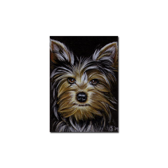 TERRIER 3 Yorkshire dog puppy pet pencil painting Sandrine Curtiss Art Limited