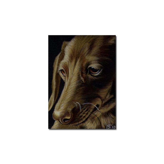 DACHSHUND 8 Teckel dog puppy pet pencil painting Sandrine Curtiss Art Limited