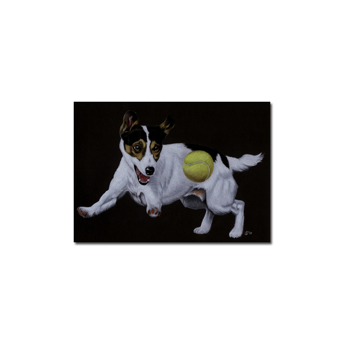 JACK RUSSELL 5 dog puppy pet pencil painting Sandrine Curtiss Art Limited