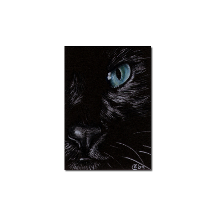 BLACK CAT 151 kitten Halloween chat noir drawing painting Sandrine Curtiss Art