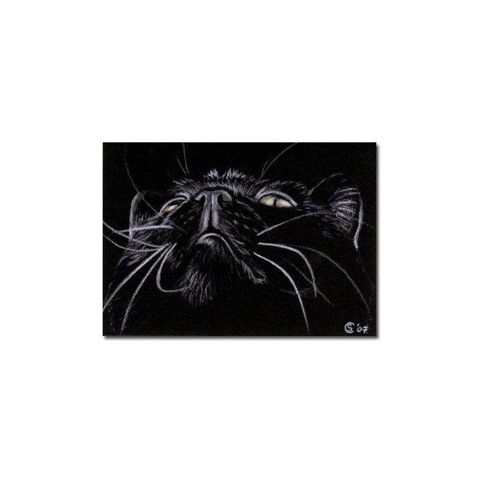 Black CAT 106 kitten Halloween chat noir drawing painting Sandrine Curtiss Art