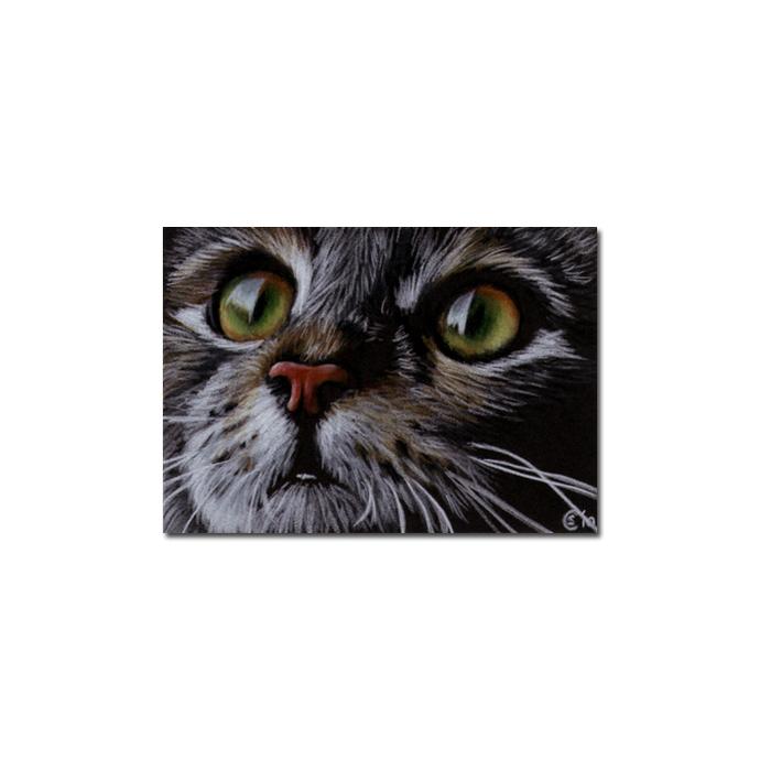 Tabby 63 CAT grey tiger kitty kitten drawing painting Sandrine Curtiss Art
