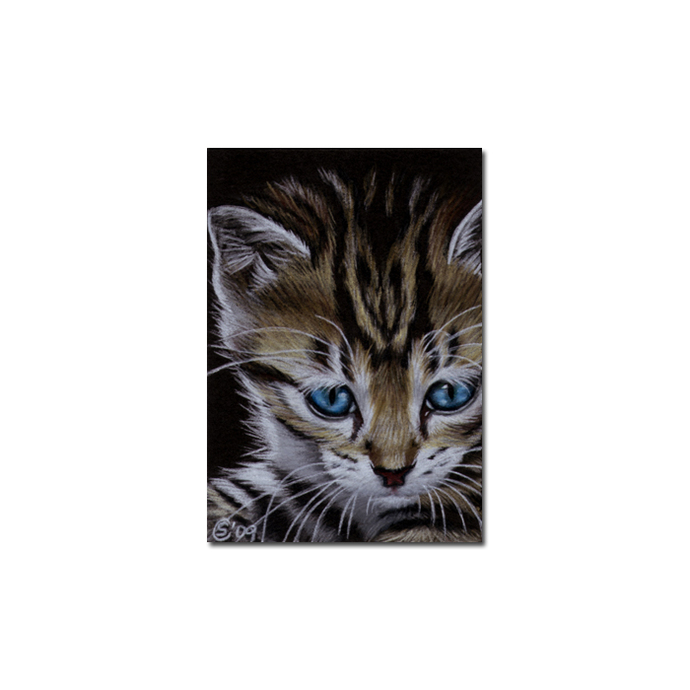 Tabby 56 CAT grey ginger orange tiger kitty kitten drawing painting Sandrine