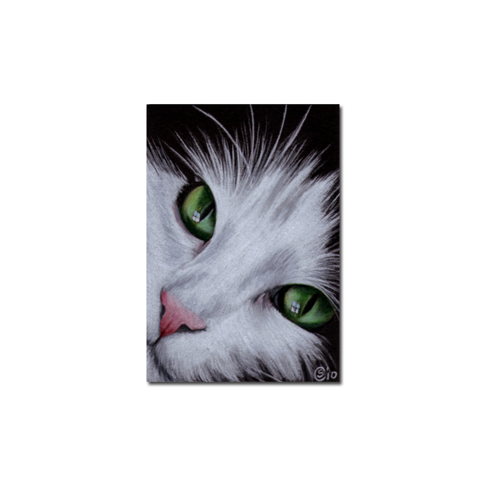 TUXEDO Holly 34 CAT kitten Black Halloween drawing painting Sandrine Curtiss Art