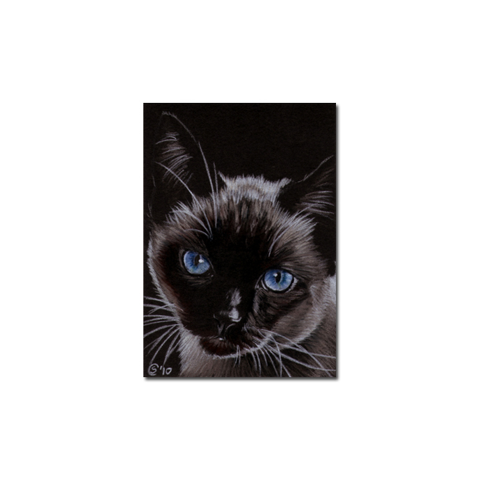 SIAMESE 4 CAT portrait kitty kitten drawing painting Sandrine Curtiss Art