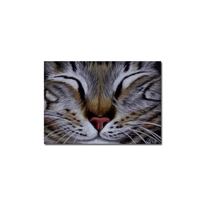 Tabby 74 CAT grey tiger kitty kitten drawing painting Sandrine Curtiss Art