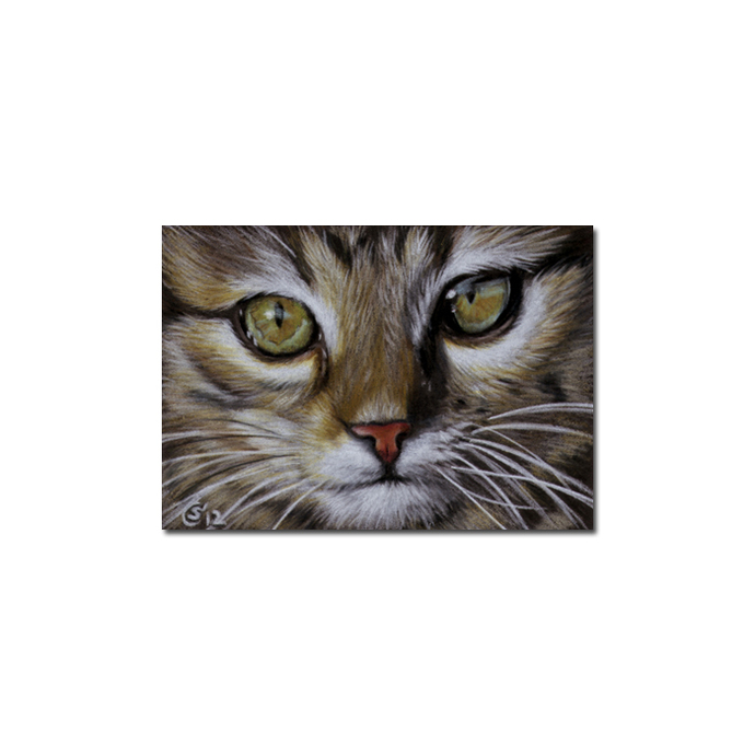 Tabby 98 CAT grey ginger orange tiger kitty kitten drawing painting Sandrine
