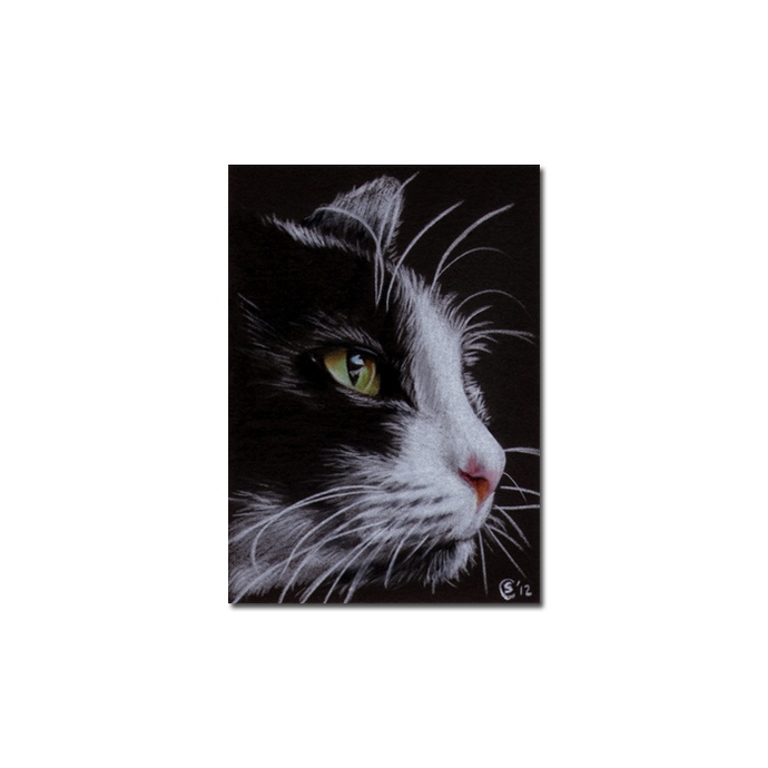 TUXEDO 18 CAT kitten Black Halloween drawing painting Sandrine Curtiss Art