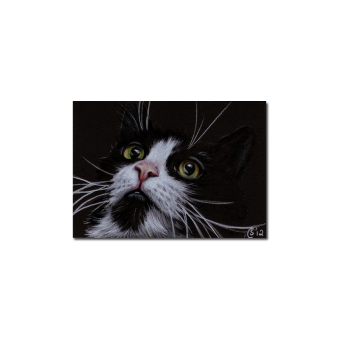 TUXEDO 17 CAT kitten Black Halloween drawing painting Sandrine Curtiss Art