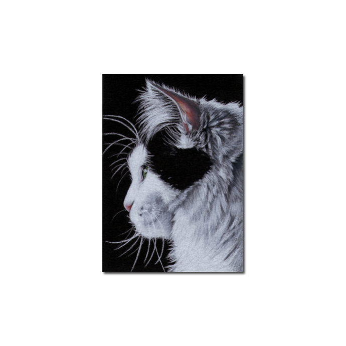 TUXEDO Holly 8 CAT kitten Black Halloween drawing painting Sandrine Curtiss Art