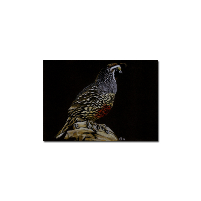 QUAIL portrait game bird pencil painting Sandrine Curtiss Art Limited Edition