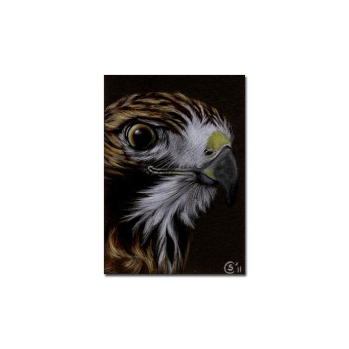 HAWK 3 raptor bird pencil painting Sandrine Curtiss Art Limited Edition Print