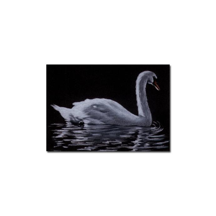 SWAN bird duck chick pencil painting Sandrine Curtiss Art Limited Edition Print
