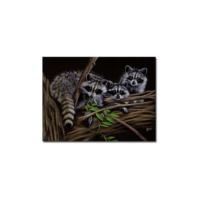 RACCOON 14 portrait woodland critter pencil painting Sandrine Curtiss Art