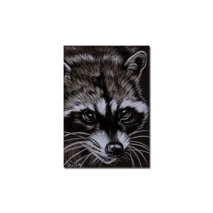 RACCOON 9 portrait woodland critter pencil painting Sandrine Curtiss Art Limited