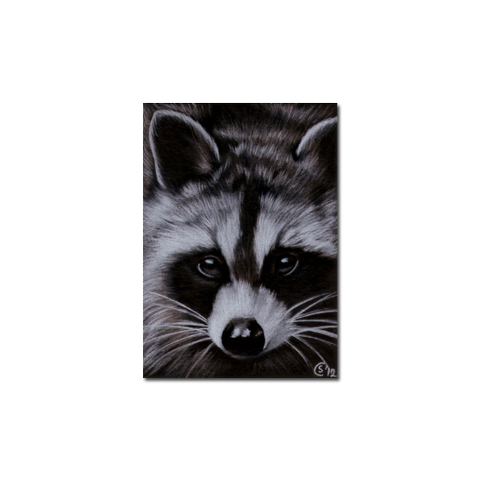 RACCOON 11 woodland critter pencil painting Sandrine Curtiss Art Limited Edition
