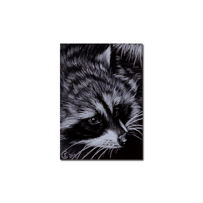 RACCOON 7 woodland critter pencil painting Sandrine Curtiss Art Limited Edition