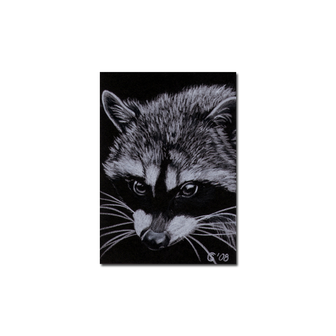 RACCOON 5 woodland critter pencil painting Sandrine Curtiss Art Limited Edition