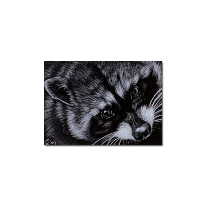 RACCOON 6 portrait woodland critter pencil painting Sandrine Curtiss Art Limited