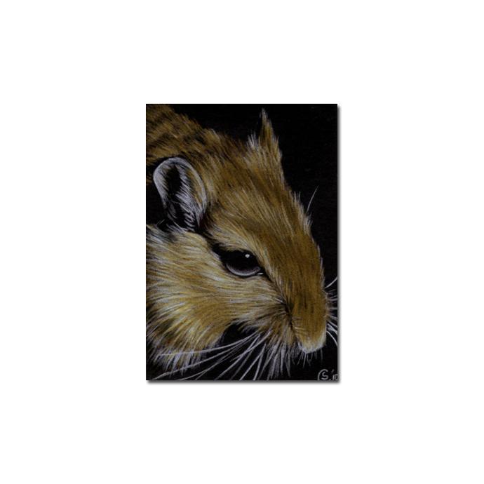 Gerbil 2 portrait rodent rat mouse pencil painting Sandrine Curtiss Art Limited