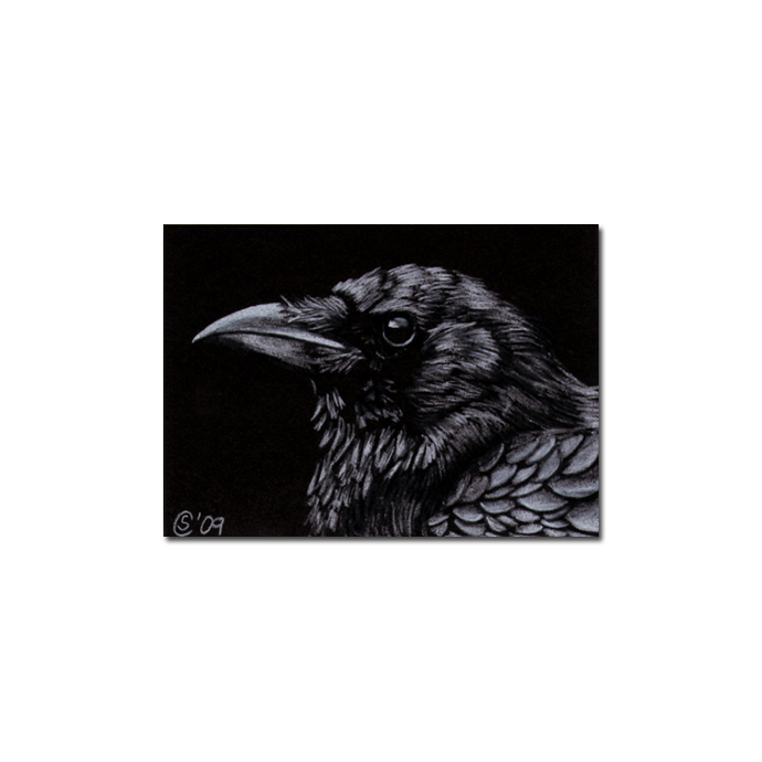 RAVEN 71 crow black bird Halloween colored pencil drawing painting Sandrine
