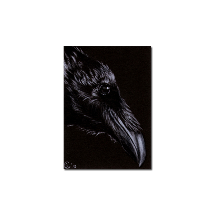 RAVEN 145 crow black bird Halloween colored pencil drawing painting Sandrine