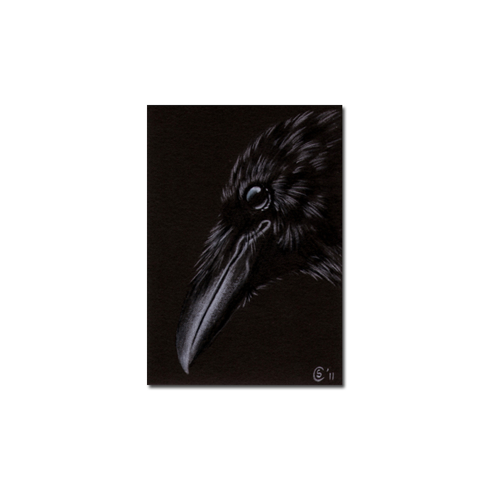 RAVEN 173 crow black bird Halloween colored pencil drawing painting Sandrine