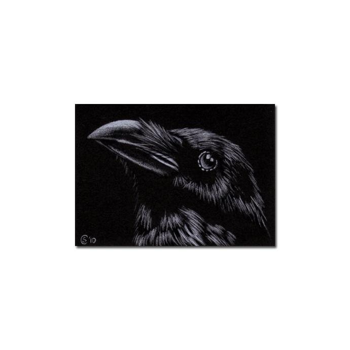 RAVEN 143 crow black bird Halloween colored pencil drawing painting Sandrine