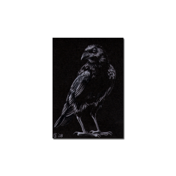 RAVEN 63 crow black bird Halloween colored pencil drawing painting Sandrine