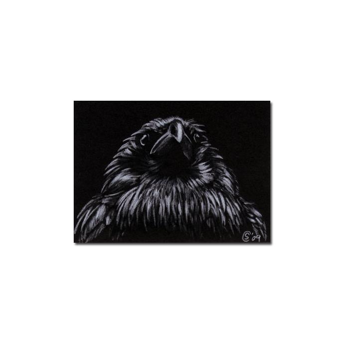 RAVEN 73 crow black bird Halloween colored pencil drawing painting Sandrine