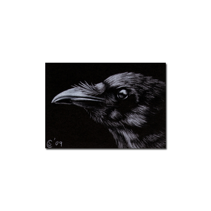 RAVEN 79 crow black bird Halloween colored pencil drawing painting Sandrine