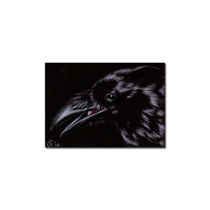 RAVEN 117 crow black bird Halloween colored pencil drawing painting Sandrine