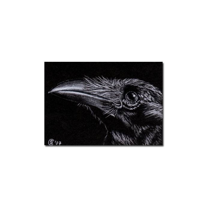 RAVEN 14 crow black bird Halloween colored pencil drawing painting Sandrine