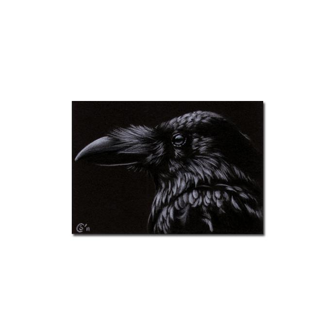 RAVEN 176 crow black bird Halloween colored pencil drawing painting Sandrine