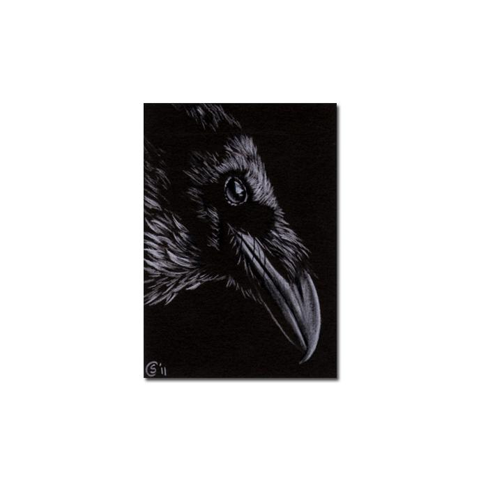RAVEN 153 crow black bird Halloween colored pencil drawing painting Sandrine