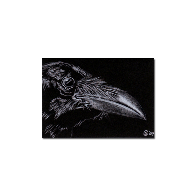RAVEN 20 crow black bird Halloween colored pencil drawing painting Sandrine