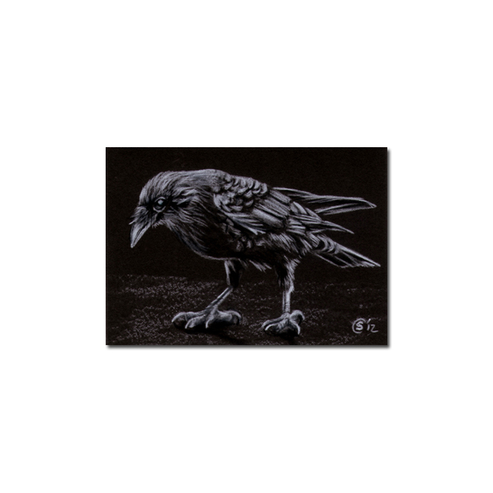 RAVEN 185 crow black bird Halloween colored pencil drawing painting Sandrine