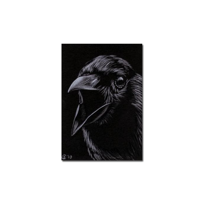 RAVEN 122 crow black bird Halloween colored pencil drawing painting Sandrine