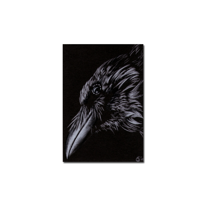 RAVEN 119 crow black bird Halloween colored pencil drawing painting Sandrine