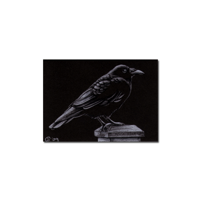 RAVEN 104 crow black bird Halloween colored pencil drawing painting Sandrine