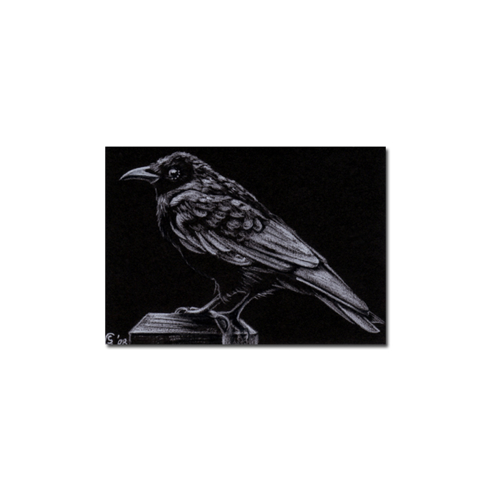RAVEN 36 crow black bird Halloween colored pencil drawing painting Sandrine