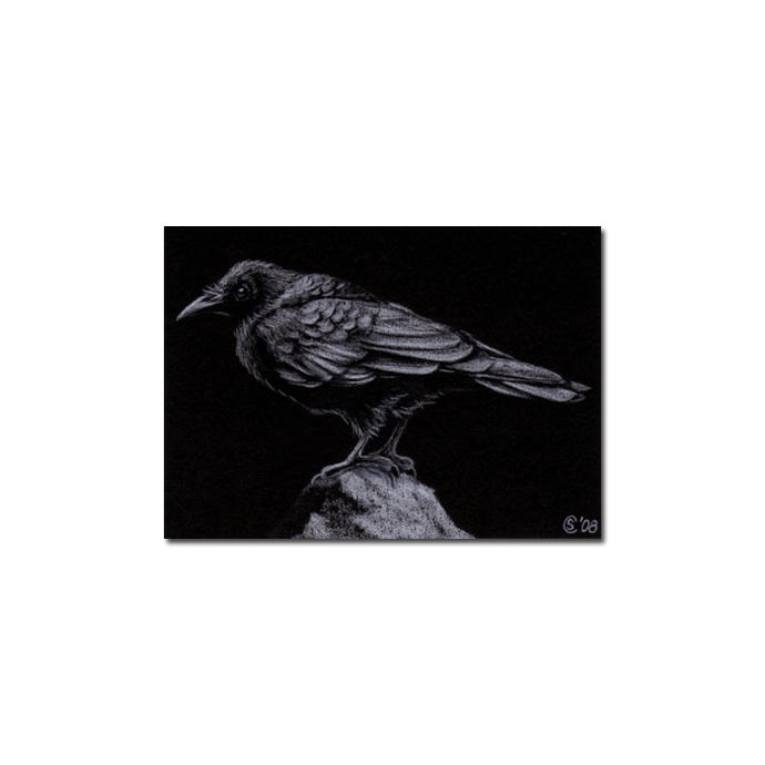 RAVEN 61 crow black bird Halloween colored pencil drawing painting Sandrine