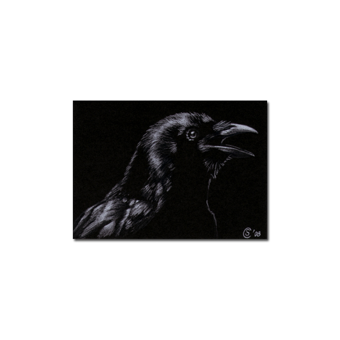 RAVEN 60 crow black bird Halloween colored pencil drawing painting Sandrine