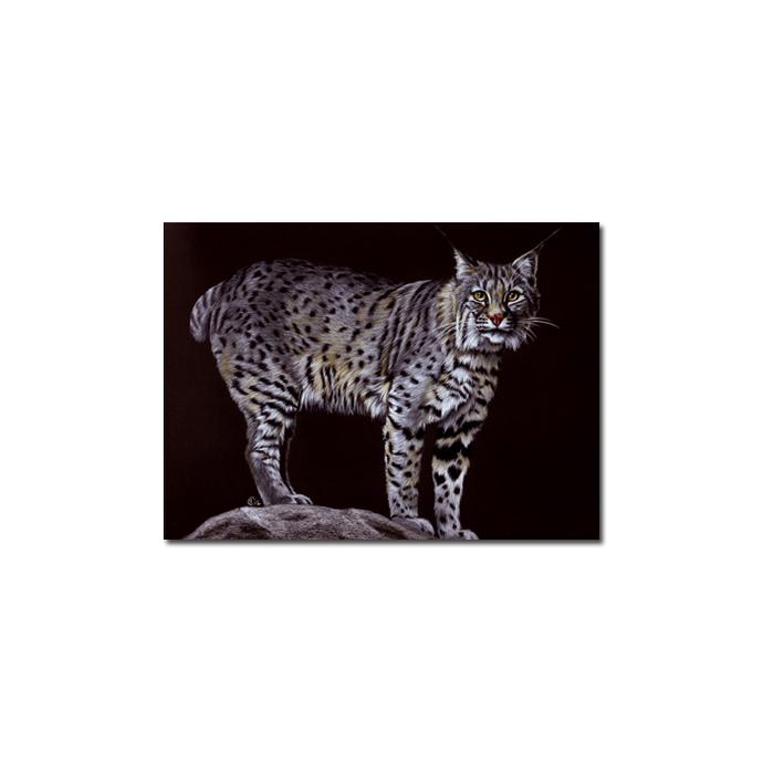 LYNX 4 portrait big cat feline pencil painting Sandrine Curtiss Art Limited