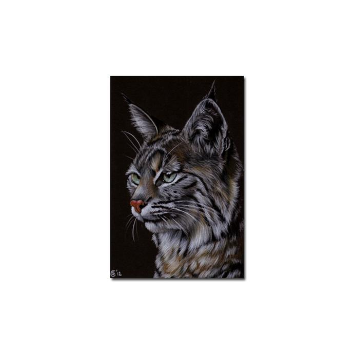 LYNX 3 portrait big cat feline pencil painting Sandrine Curtiss Art Limited
