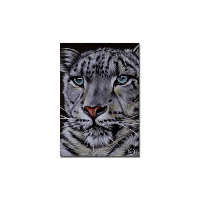 SNOW LEOPARD 13 big cat animal feline pencil painting Sandrine Curtiss Art