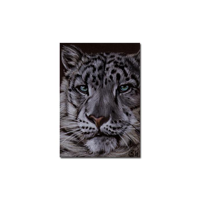 SNOW LEOPARD 11 portrait big cat animal feline pencil painting Sandrine Curtiss