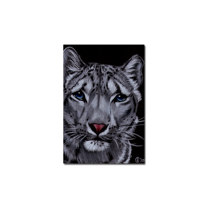 SNOW LEOPARD 10 portrait big cat animal feline pencil painting Sandrine Curtiss