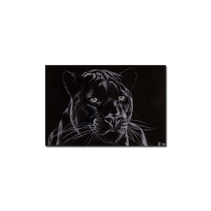 BLACK PANTHER 4 big cat animal feline pencil painting Sandrine Curtiss Art